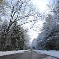Photos: White Trees 3-3-13