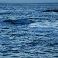 Blue Waves 3-9-13
