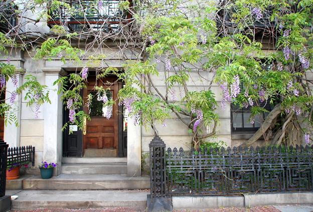 Wisteria Apartment 6-2-13