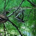 写真: Green Water 6-15-13