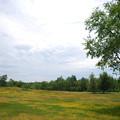 写真: Golf Course 6-16-13