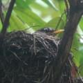 Mama Robin 6-29-13
