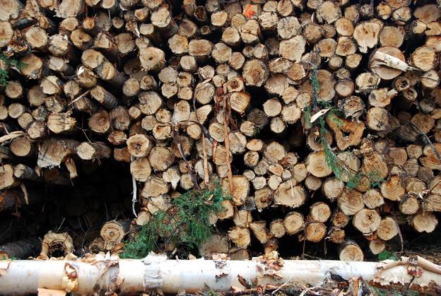 Logs 9-2-13