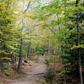 Photos: At North Loop Trail 10-11-13