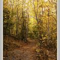 North Loop Trail by Harry & Scrap 10-11-13