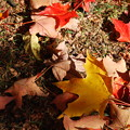 Photos: Fallen Leaves 10-19-13