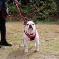 Photos: Daisy at the Overlook 10-12-13