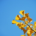 Yellow in Blue 10-19-13