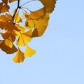 Photos: Golden 10-19-13