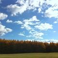 Tamarack Trees 11-8-13