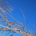 写真: Blue Sky 12-25-13