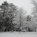 Snowing 1-19-14