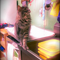 Photos: Lola by the Sink 2-1-14