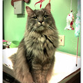 Photos: Lola in the Kitchen 2-1-14