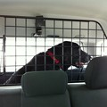 Jett Coming Home 3-1-14