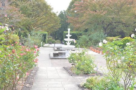 西宮北山緑化植物園の秋薔薇2012