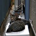 Photos: 猫の風景 (14) 2012年 9月