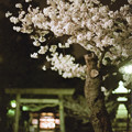 Photos: 花の姿 (22) 2013年 3月