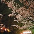 Photos: 花の姿 (23) 2013年 3月