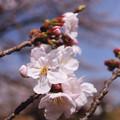 Photos: 春の陽気 (9) 2013年 3月