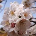 Photos: 春の陽気 (10) 2013年 3月