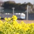 菜の花と豊橋鉄道