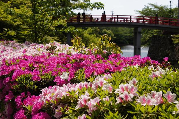 写真: 岡崎城つつじ2