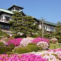 Photos: 蒲郡つつじ2