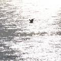 シルエット鳥