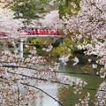 お堀に掛かる橋と桜