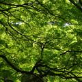 写真: いろいろな緑