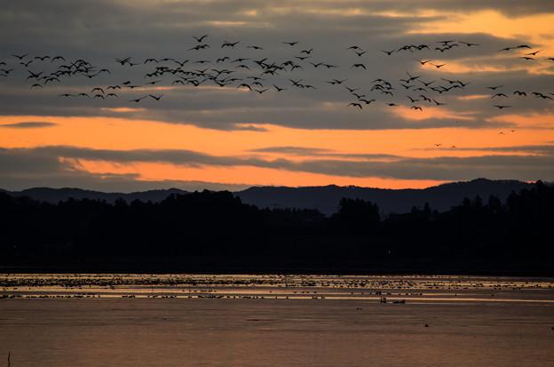 日の出間近の伊豆沼