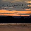 写真: 日の出間近の伊豆沼