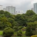 大都会の中の森