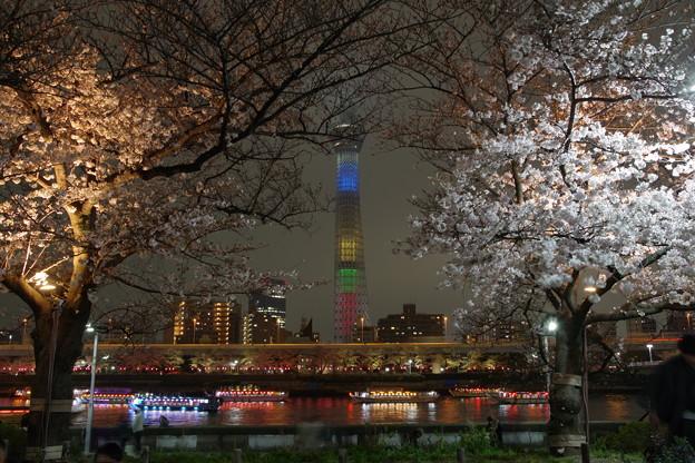 スカイツリーと夜桜