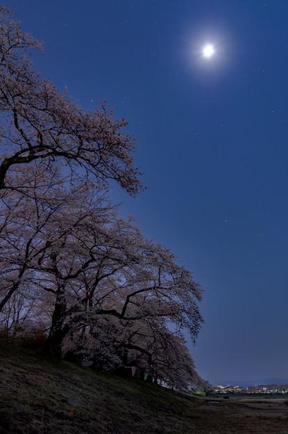 月と星と夜桜