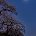 Photos: 月と星と夜桜