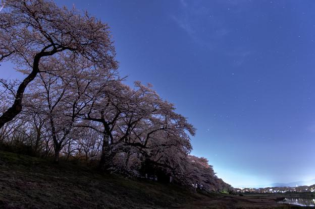 沈みゆくオリオンと桜