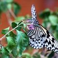 Photos: 蝶に挑戦