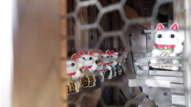 131130 招き猫左列@琴平神社