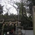 Photos: 京都~♪車折神社に、行って...
