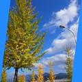 写真: Autumn_Sky