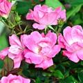 Photos: 2013_0518_152109_S