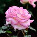 Photos: 2013_0518_155159_S