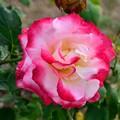 Photos: 2013_0518_155248_S