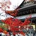 2013_1123_140840_S 南禅寺