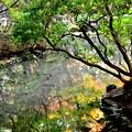 Photos: 2013_1123_130014_S 法然院
