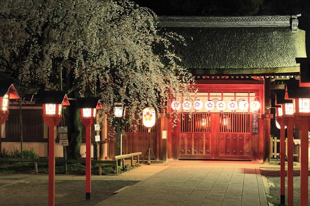 Photos: 魁桜 京都・平野神社
