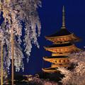 写真: 五重塔と夜桜 京都・東寺