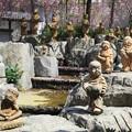 写真: とある春の昼下がり 京都・六角堂